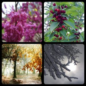four seasons in Iran