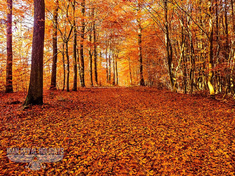 Alimestan Forest, Amol