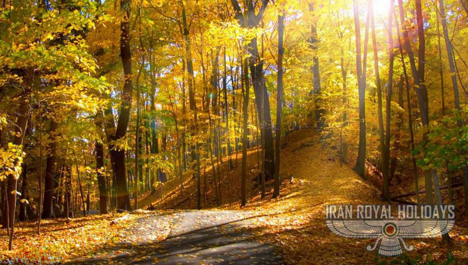 Cloud forest – Shahroud fall 2021